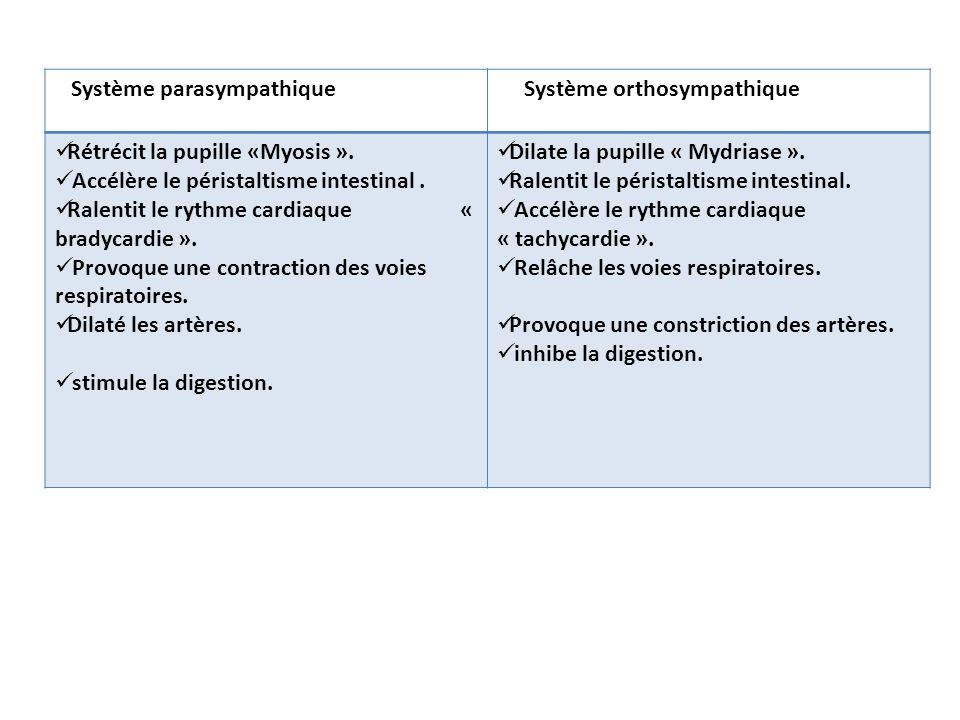Système parasympathique Système orthosympathique Rétrécit la pupille «Myosis ». Accélère le péristaltisme intestinal. Ralentit le rythme cardiaque « b