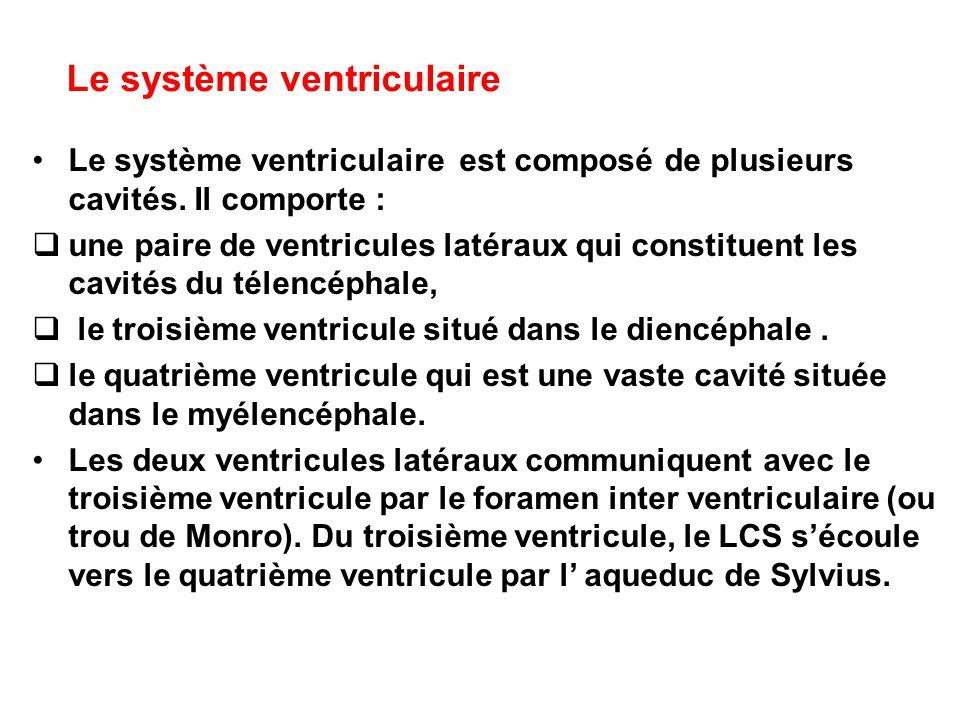 Le système ventriculaire Le système ventriculaire est composé de plusieurs cavités. Il comporte :  une paire de ventricules latéraux qui constituent