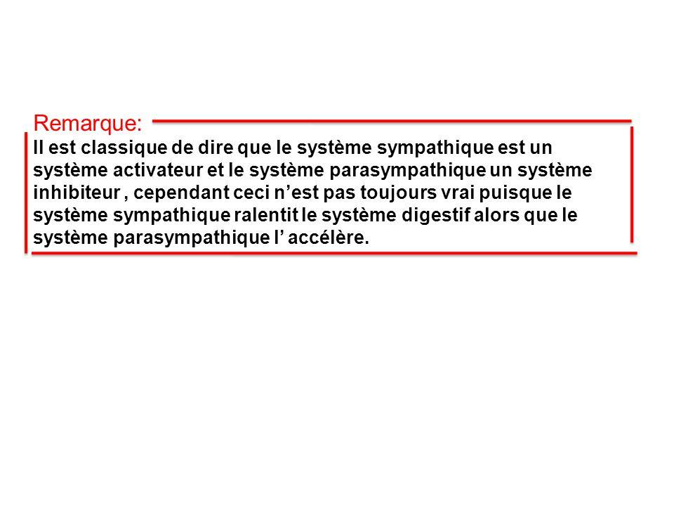 Remarque: Il est classique de dire que le système sympathique est un système activateur et le système parasympathique un système inhibiteur, cependant