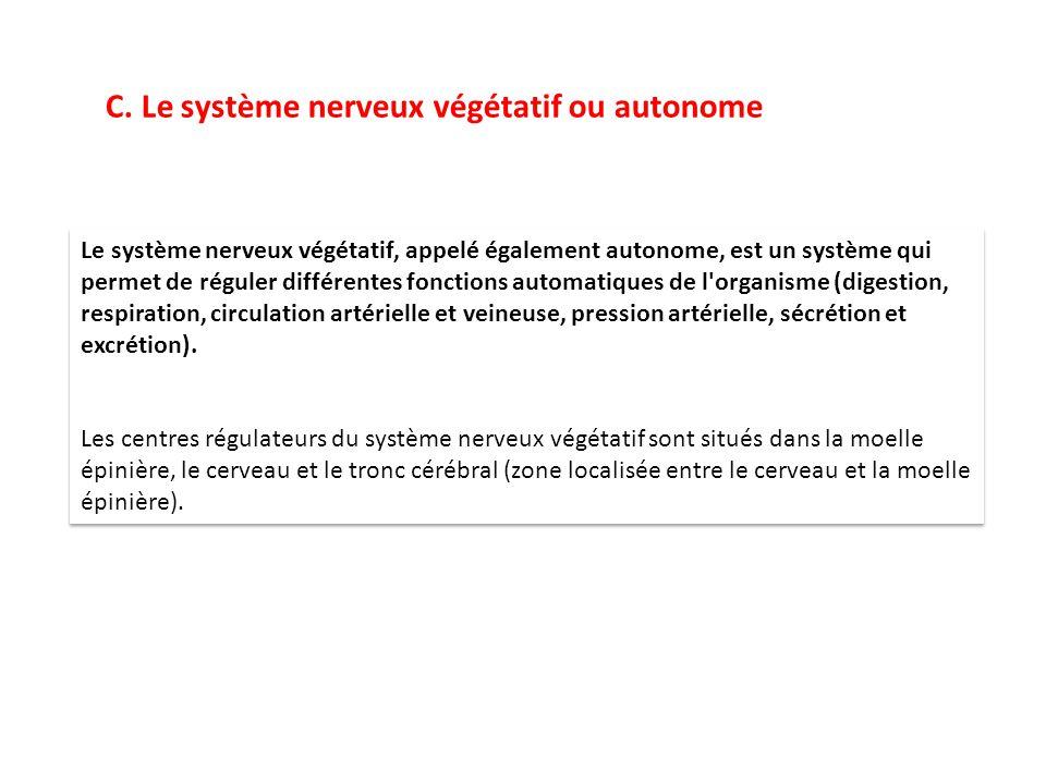 C. Le système nerveux végétatif ou autonome Le système nerveux végétatif, appelé également autonome, est un système qui permet de réguler différentes