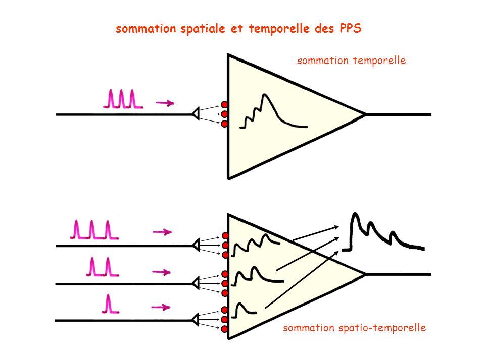 sommation spatiale et temporelle des PPS sommation temporelle sommation spatio-temporelle