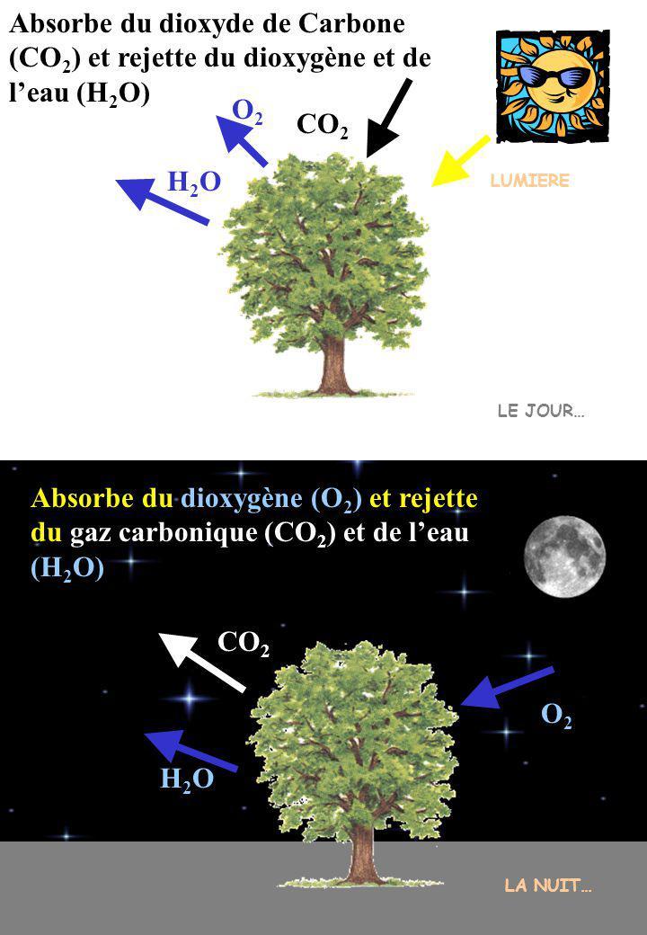 Principe de la photosynthèse Période de transformationPériode de rejet Il faut On obtient eau ______ _____________ ____ ________ ___ _________ _______