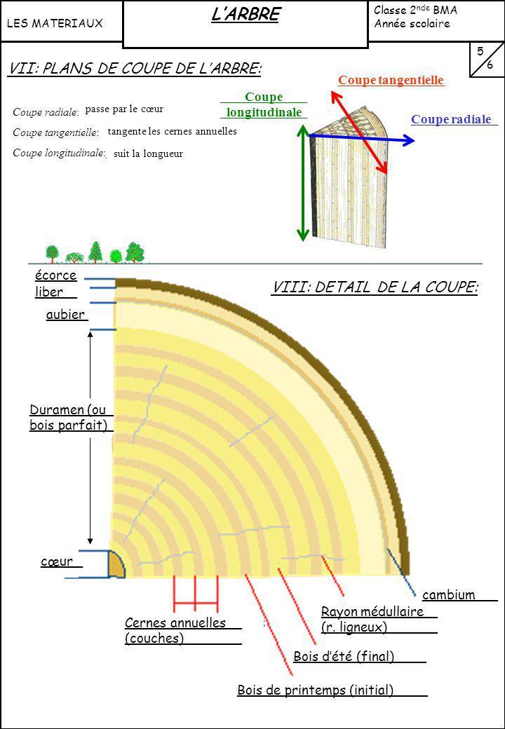homogène hétérogène Forte (dense) Faible (expansé) Essentiellement les feuillus Résineux, peuplier… Caractéristiques du bois