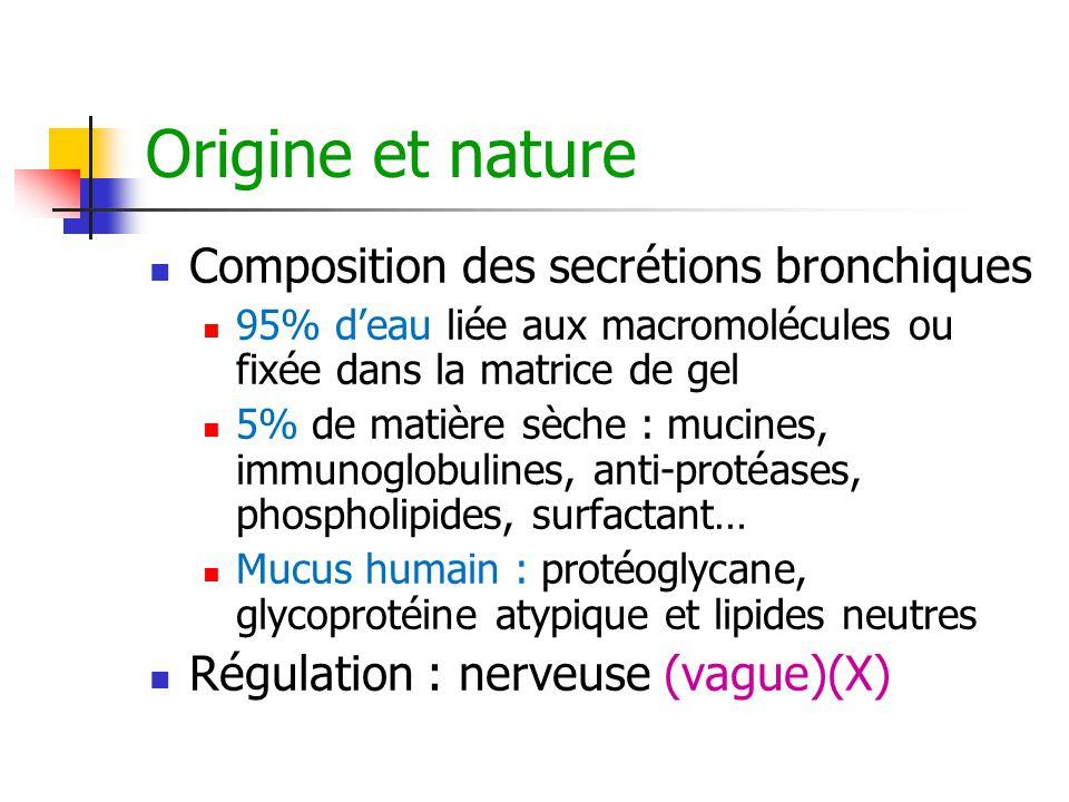 Origine et nature Composition des secrétions bronchiques 95% d'eau liée aux macromolécules ou fixée dans la matrice de gel 5% de matière sèche : mucin