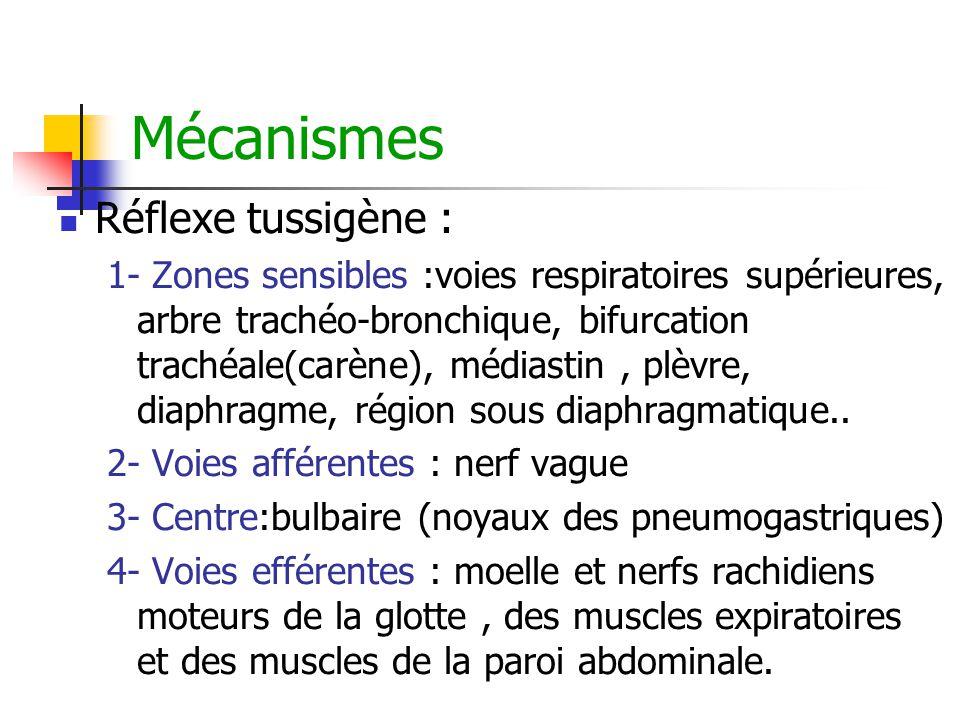 Mécanismes Réflexe tussigène : 1- Zones sensibles :voies respiratoires supérieures, arbre trachéo-bronchique, bifurcation trachéale(carène), médiastin