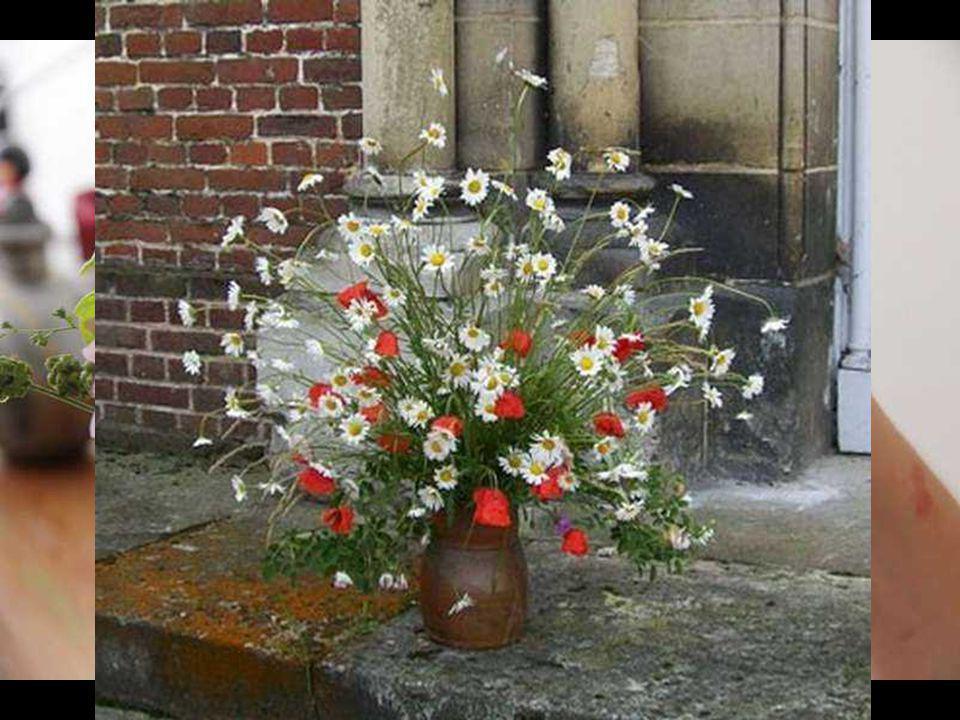 L a patience est une fleur qui ne pousse pas dans tous les jardins. John Heywood