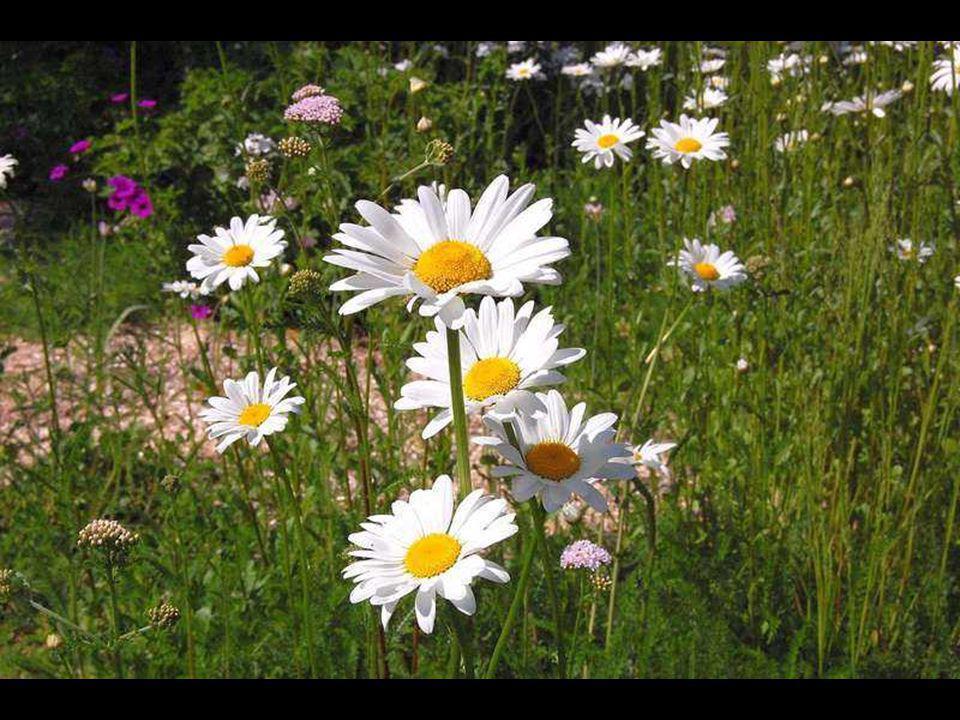 On n évite pas de fleurir si l on est bien né. Jacques Rivière