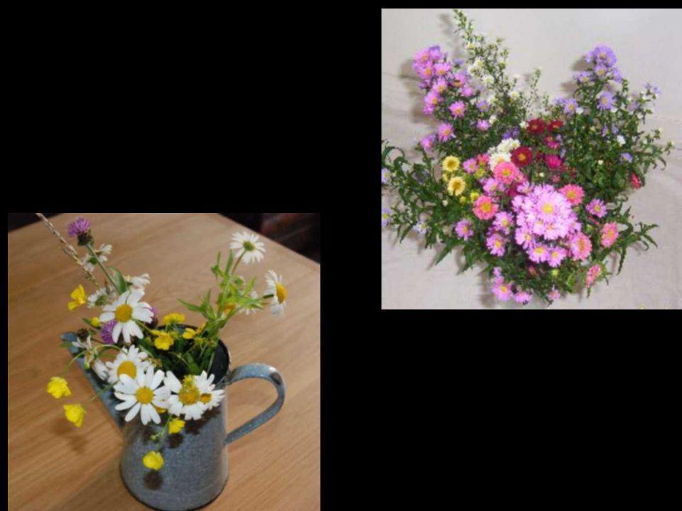 Savons-nous ce que serait une humanité qui ne connaîtrait pas la fleur? Maurice Maeterlinck