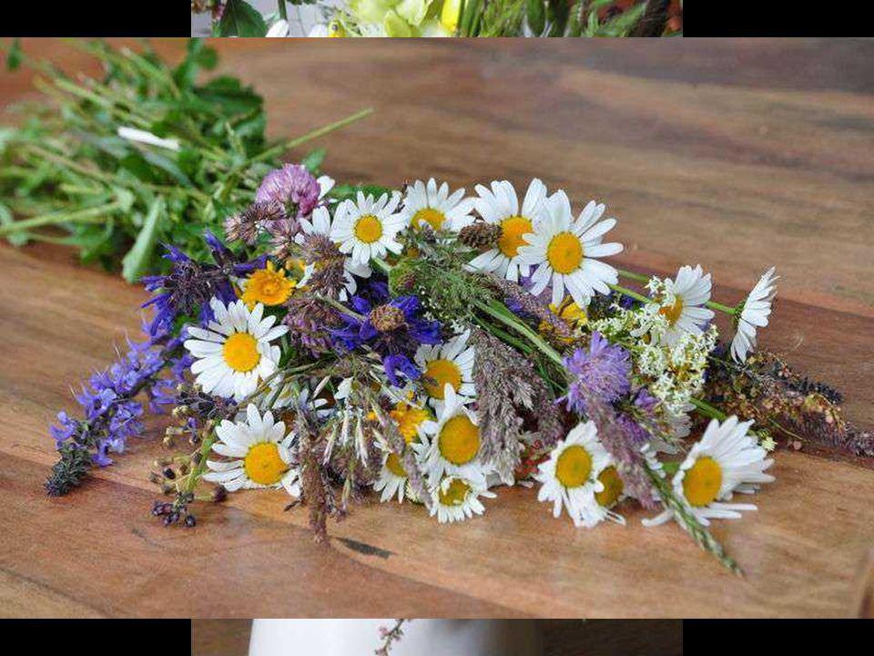 Si Job avait planté des fleurs sur son fumier, il aurait eu les fleurs les plus belles du monde! Edmond Rostand