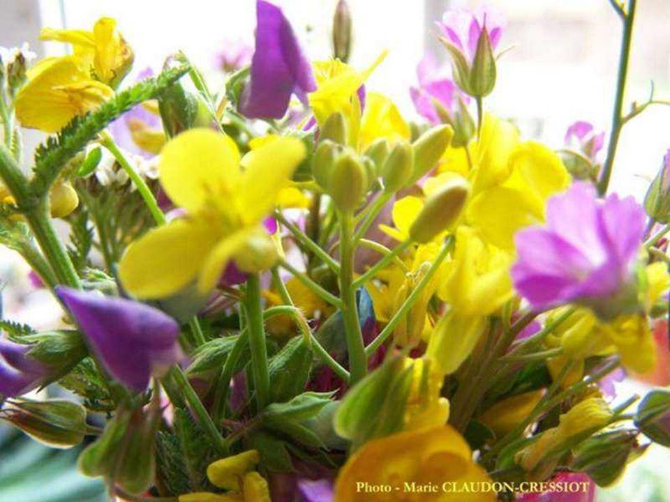 E n croyant à des fleurs, souvent on les fait naître. Edmond Rostand