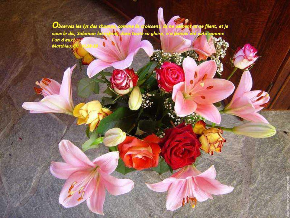 L amour est la fleur du printemps de la vie ; toute fleur se fane.