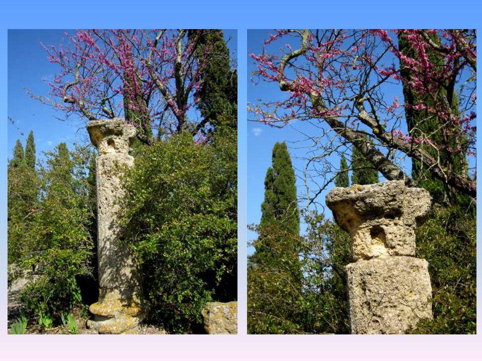 Colonnes parmi la floraison printanière des arbres de Judée