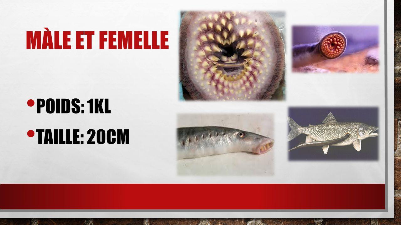 MÀLE ET FEMELLE POIDS: 1KL TAILLE: 20CM