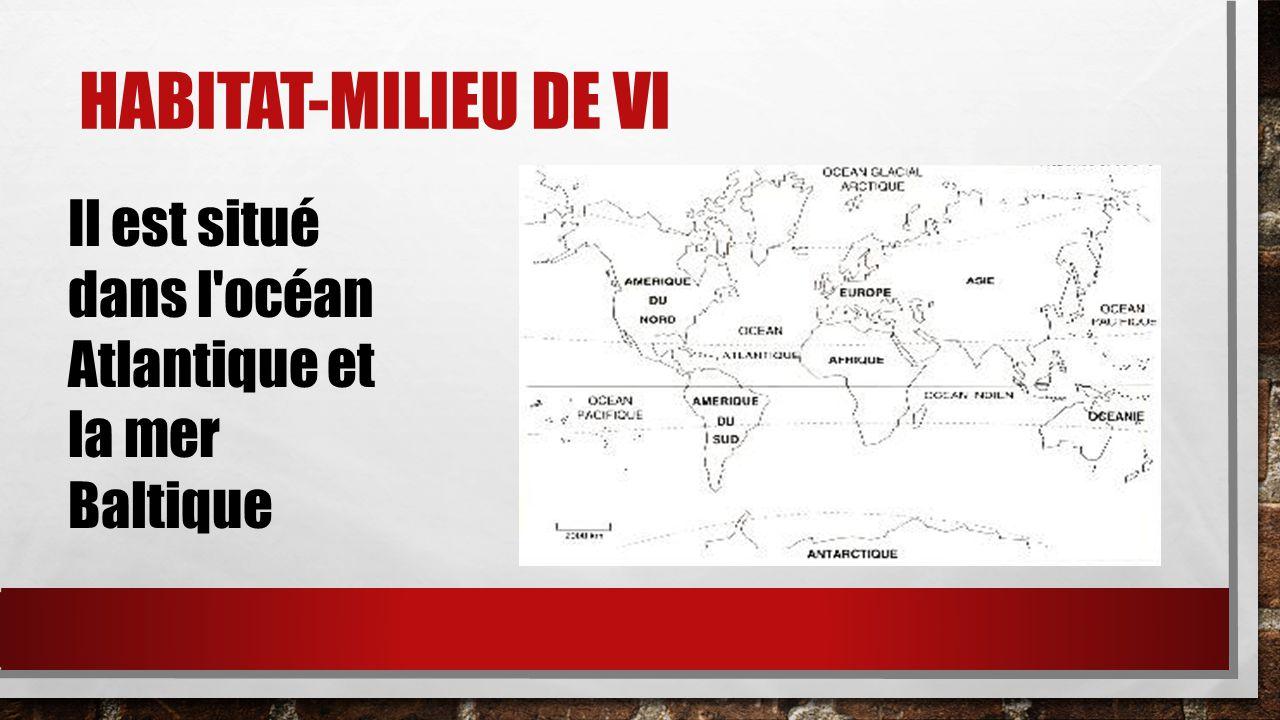 HABITAT-MILIEU DE VI Il est situé dans l'océan Atlantique et la mer Baltique