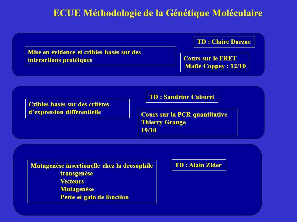 ECUE Méthodologie de la Génétique Moléculaire Mise en évidence et cribles basés sur des interactions protéiques Cribles basés sur des critères d'expression différentielle Mutagenèse insertionelle chez la drosophile transgenèse Vecteurs Mutagenèse Perte et gain de fonction Cours sur le FRET Maïté Coppey : 12/10 Cours sur la PCR quantitative Thierry Grange 19/10 TD : Claire Darzac TD : Sandrine Caburet TD : Alain Zider