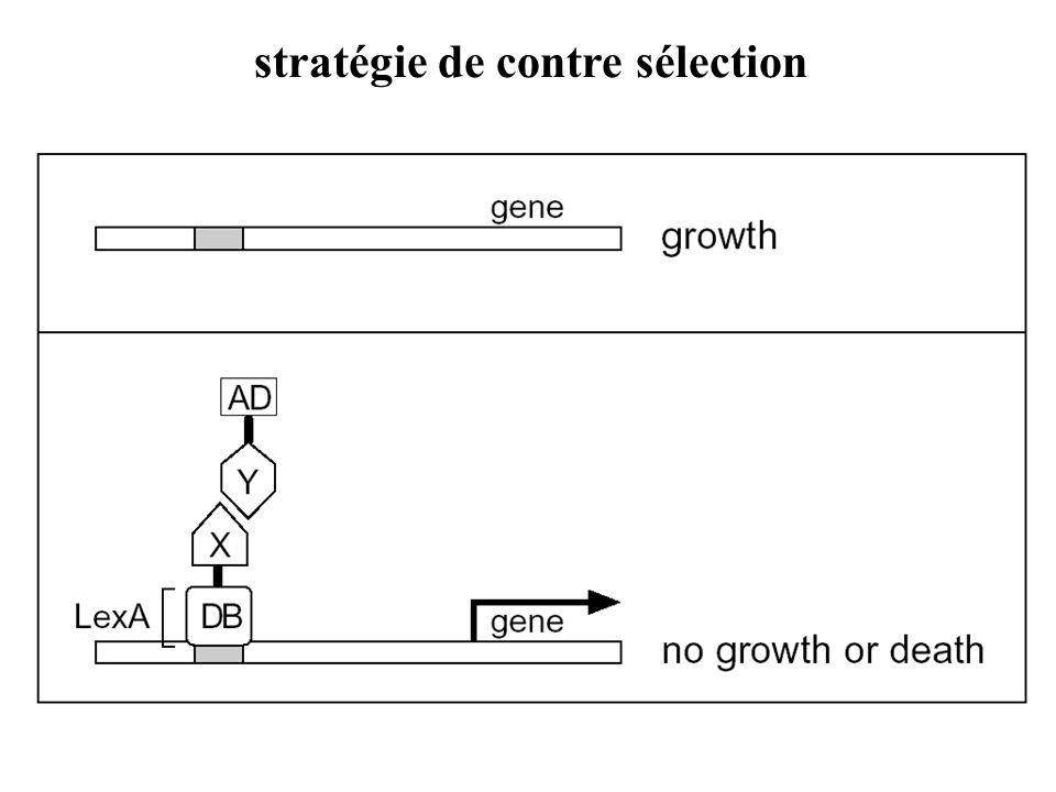 stratégie de contre sélection