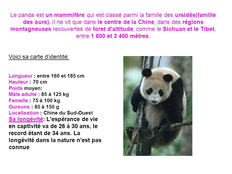 Le panda est un mammifère qui est classé parmi la famille des ursidés(famille des ours). Il ne vit que dans le centre de la Chine, dans des régions mo