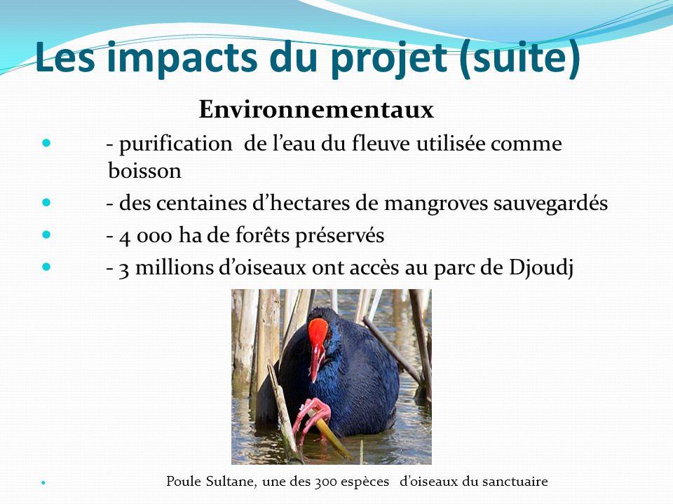 Les impacts du projet (suite) Environnementaux - purification de l'eau du fleuve utilisée comme boisson - des centaines d'hectares de mangroves sauvegardés - 4 000 ha de forêts préservés - 3 millions d'oiseaux ont accès au parc de Djoudj Poule Sultane, une des 300 espèces d'oiseaux du sanctuaire Pédagogiques ou de capacitation - 400 femmes sont formées en organisation d'autopromotion pour la vente du biocharbon - 1000 exploitants forestiers regroupés au sein de 11 coopératives forestières le long du fleuve sont formés et reconvertis en producteurs de biocharbon