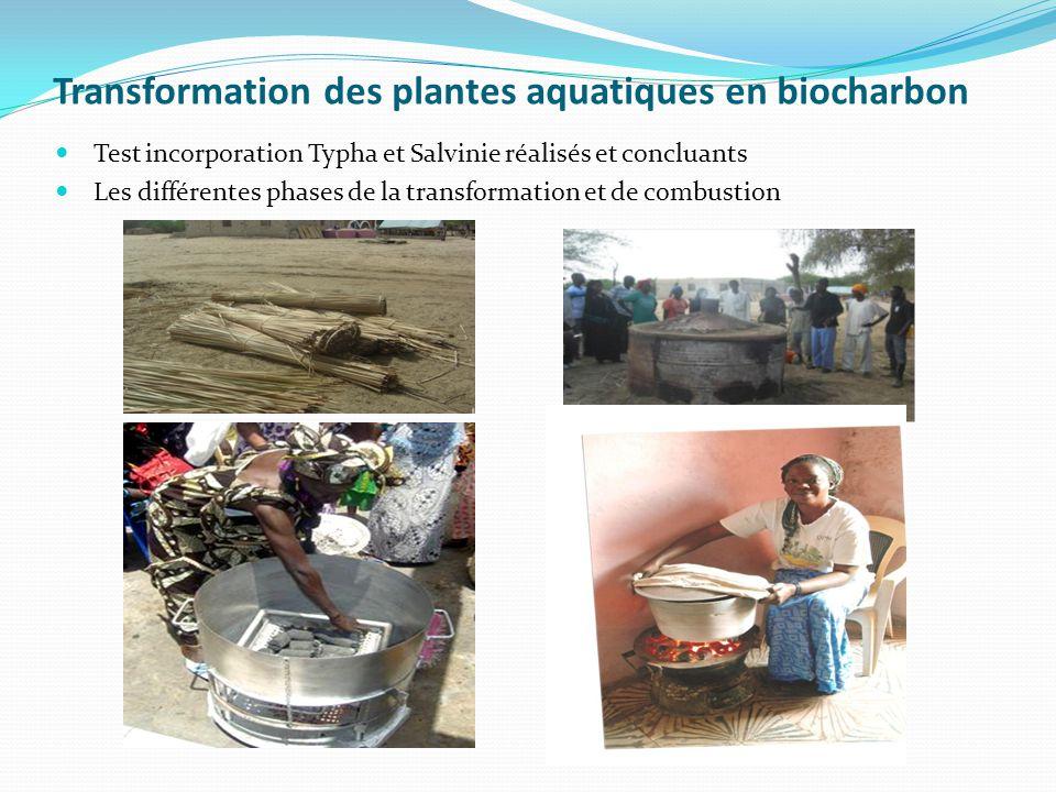 Transformation des plantes aquatiques en biocharbon Test incorporation Typha et Salvinie réalisés et concluants Les différentes phases de la transform