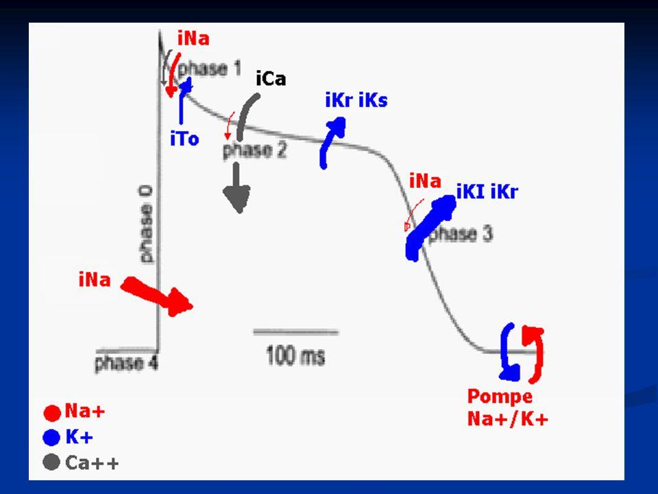 Classe II Action anti-arythmique et anti-fibrillatoire Bloquent les Récepteurs β adrénergiques Action anti-arythmique et anti-fibrillatoire Bloquent les Récepteurs β adrénergiques Aiminuent la mortalité dans l' insuf card et en post-infarctus Aiminuent la mortalité dans l' insuf card et en post-infarctus Action antihypertensive Action antihypertensiveIndications:.