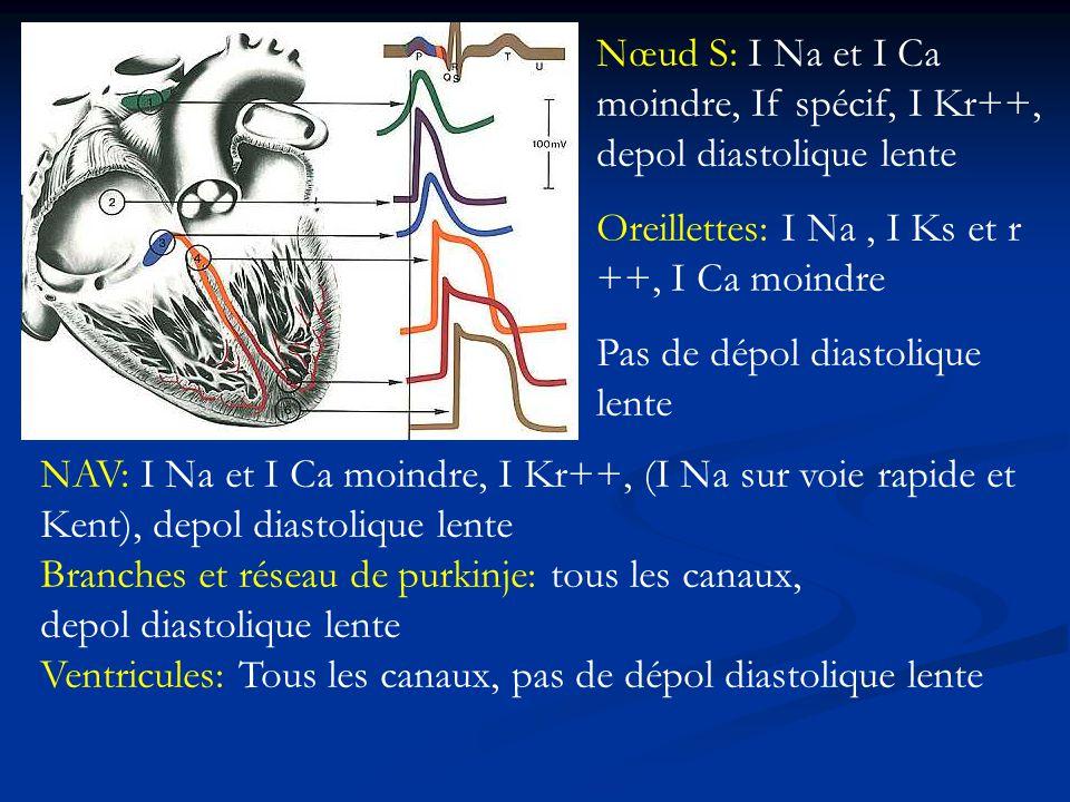 Nœud S: I Na et I Ca moindre, If spécif, I Kr++, depol diastolique lente Oreillettes: I Na, I Ks et r ++, I Ca moindre Pas de dépol diastolique lente NAV: I Na et I Ca moindre, I Kr++, (I Na sur voie rapide et Kent), depol diastolique lente Branches et réseau de purkinje: tous les canaux, depol diastolique lente Ventricules: Tous les canaux, pas de dépol diastolique lente