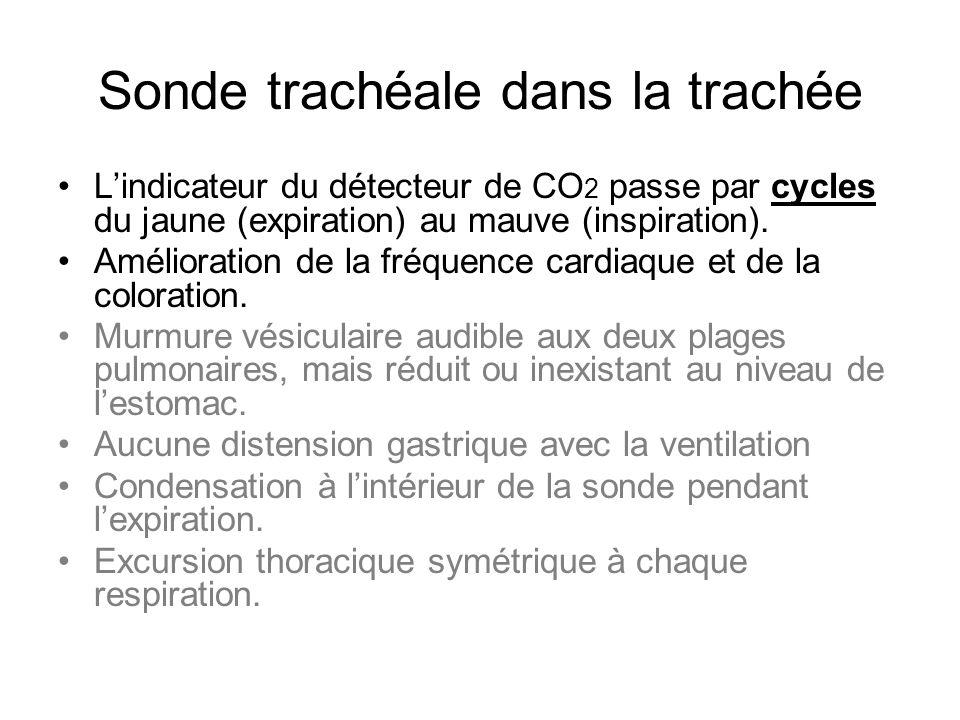 Sonde trachéale dans la trachée L'indicateur du détecteur de CO 2 passe par cycles du jaune (expiration) au mauve (inspiration). Amélioration de la fr