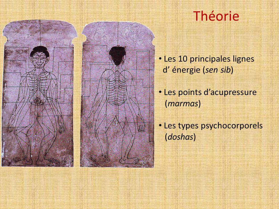 Théorie Les 10 principales lignes d' énergie (sen sib) Les points d'acupressure (marmas) Les types psychocorporels (doshas)