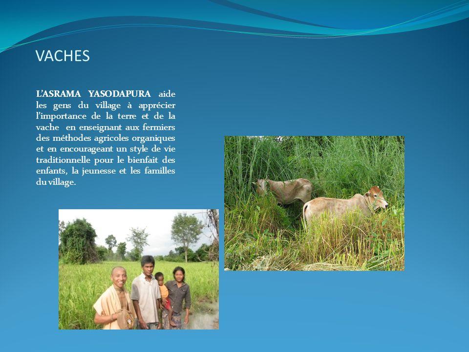 VACHES L'ASRAMA YASODAPURA aide les gens du village à apprécier l'importance de la terre et de la vache en enseignant aux fermiers des méthodes agrico
