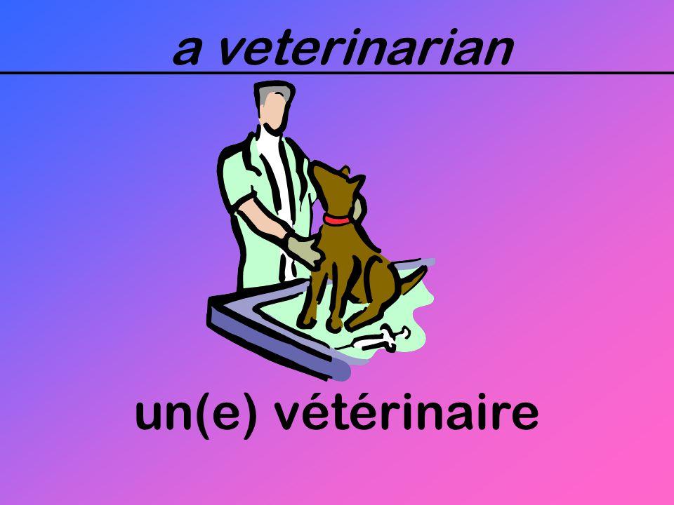a veterinarian un(e) vétérinaire
