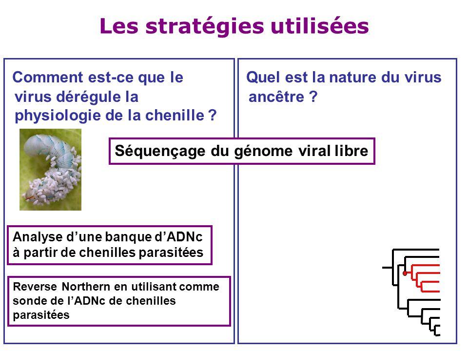 Les stratégies utilisées Comment est-ce que le virus dérégule la physiologie de la chenille ? Quel est la nature du virus ancêtre ? Séquençage du géno
