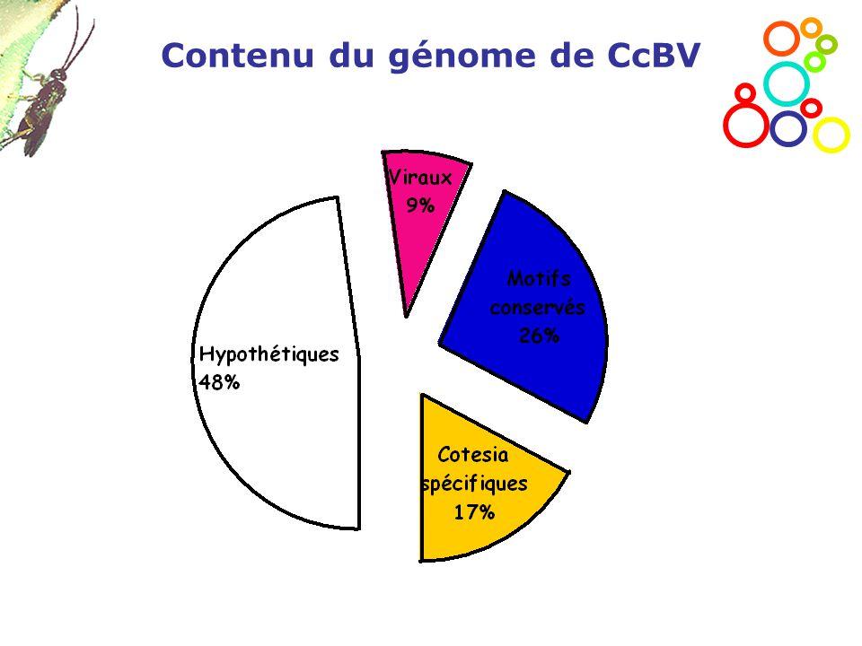 Contenu du génome de CcBV