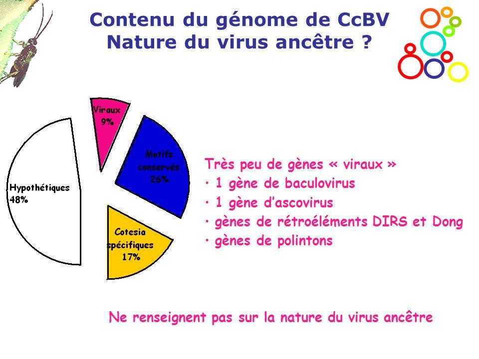 Contenu du génome de CcBV Nature du virus ancêtre ? Très peu de gènes « viraux » 1 gène de baculovirus 1 gène d'ascovirus gènes de rétroéléments DIRS