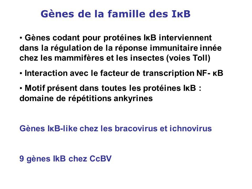 Gènes de la famille des IκB Gènes codant pour protéines IκB interviennent dans la régulation de la réponse immunitaire innée chez les mammifères et le