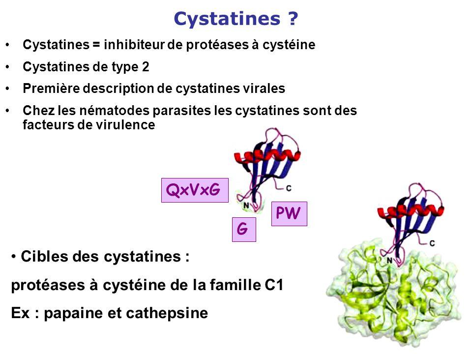 Cystatines ? Cystatines = inhibiteur de protéases à cystéine Cystatines de type 2 Première description de cystatines virales Chez les nématodes parasi