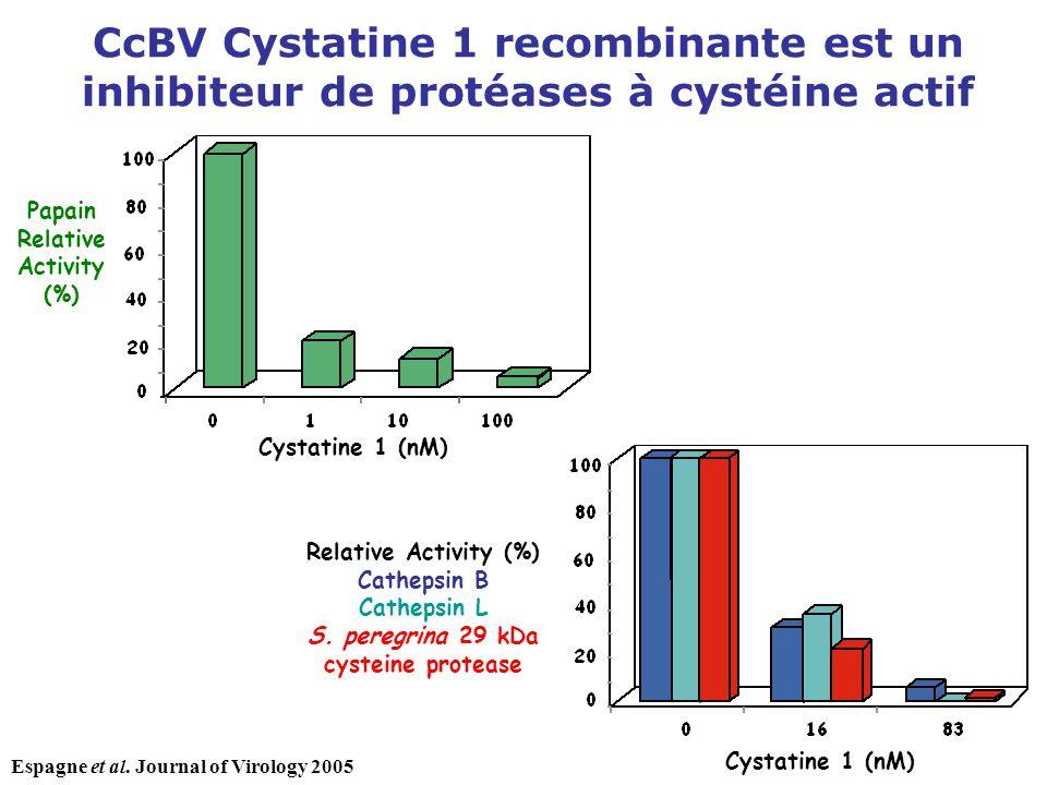 CcBV Cystatine 1 recombinante est un inhibiteur de protéases à cystéine actif Papain Relative Activity (%) Cystatine 1 (nM) Relative Activity (%) Cath