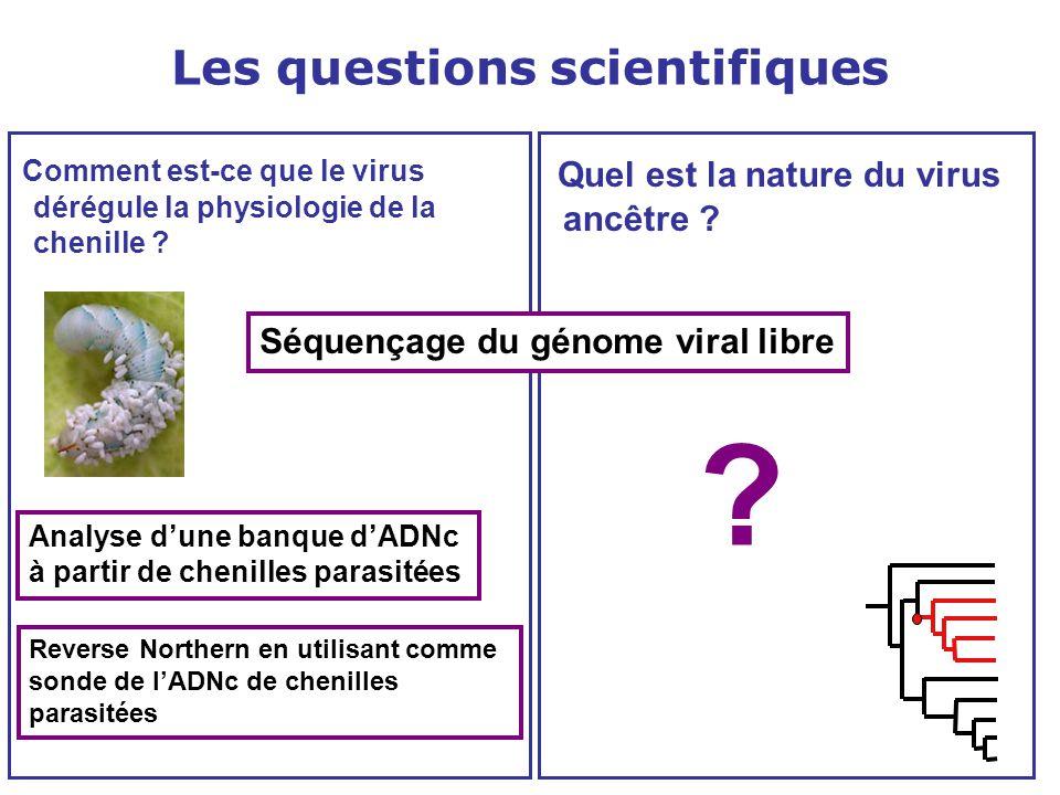 Comment est-ce que le virus dérégule la physiologie de la chenille ? Quel est la nature du virus ancêtre ? Séquençage du génome viral libre Analyse d'