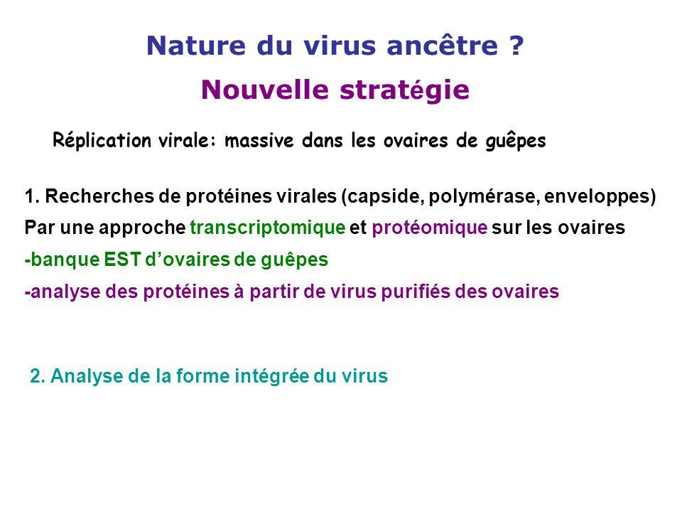 Réplication virale: massive dans les ovaires de guêpes 1. Recherches de protéines virales (capside, polymérase, enveloppes) Par une approche transcrip