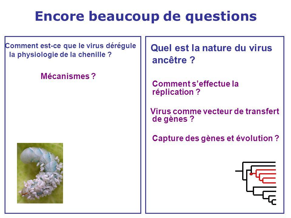 Encore beaucoup de questions Comment est-ce que le virus dérégule la physiologie de la chenille ? Mécanismes ? Quel est la nature du virus ancêtre ? C