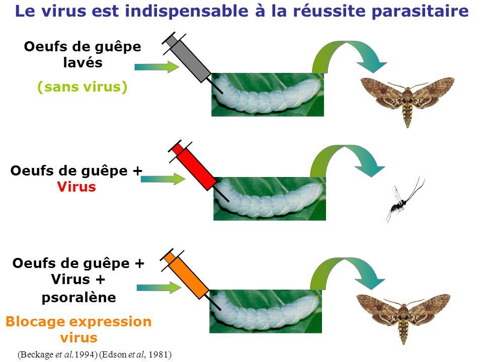 Oeufs de guêpe + Virus (Beckage et al,1994) (Edson et al, 1981) Le virus est indispensable à la réussite parasitaire Oeufs de guêpe lavés (sans virus)