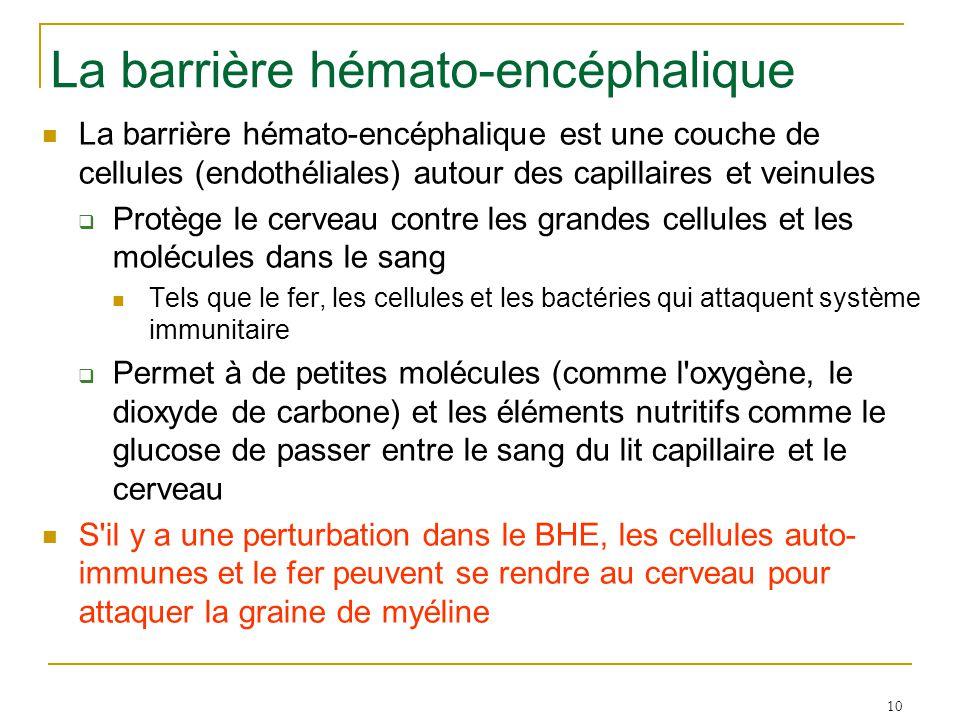 10 La barrière hémato-encéphalique La barrière hémato-encéphalique est une couche de cellules (endothéliales) autour des capillaires et veinules  Protège le cerveau contre les grandes cellules et les molécules dans le sang Tels que le fer, les cellules et les bactéries qui attaquent système immunitaire  Permet à de petites molécules (comme l oxygène, le dioxyde de carbone) et les éléments nutritifs comme le glucose de passer entre le sang du lit capillaire et le cerveau S il y a une perturbation dans le BHE, les cellules auto- immunes et le fer peuvent se rendre au cerveau pour attaquer la graine de myéline