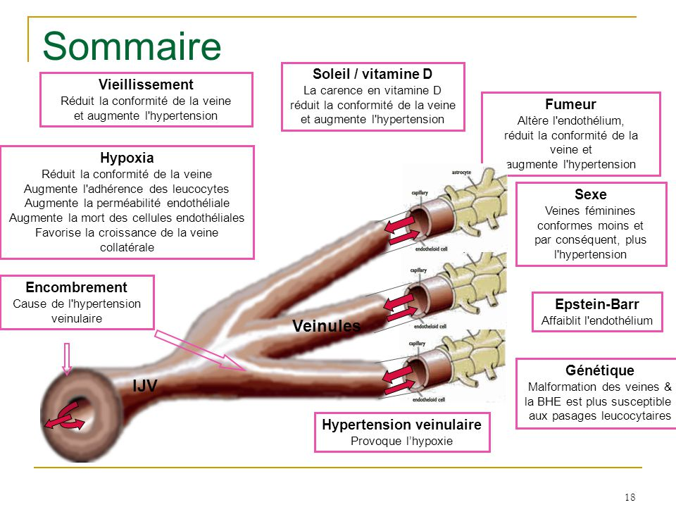18 Sommaire Sexe Veines féminines conformes moins et par conséquent, plus l hypertension Soleil / vitamine D La carence en vitamine D réduit la conformité de la veine et augmente l hypertension Vieillissement Réduit la conformité de la veine et augmente l hypertension Fumeur Altère l endothélium, réduit la conformité de la veine et augmente l hypertension Epstein-Barr Affaiblit l endothélium Génétique Malformation des veines & la BHE est plus susceptible aux pasages leucocytaires IJV Veinules Encombrement Cause de l hypertension veinulaire Hypertension veinulaire Provoque l'hypoxie Hypoxia Réduit la conformité de la veine Augmente l adhérence des leucocytes Augmente la perméabilité endothéliale Augmente la mort des cellules endothéliales Favorise la croissance de la veine collatérale