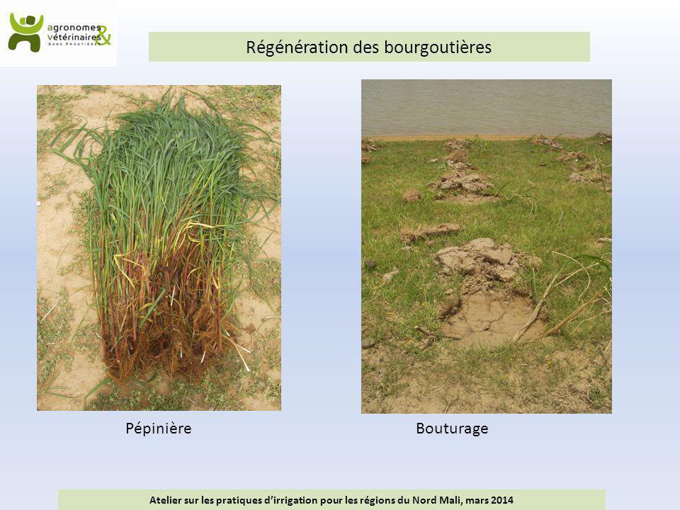 Régénération des bourgoutières Atelier sur les pratiques d'irrigation pour les régions du Nord Mali, mars 2014 PépinièreBouturage