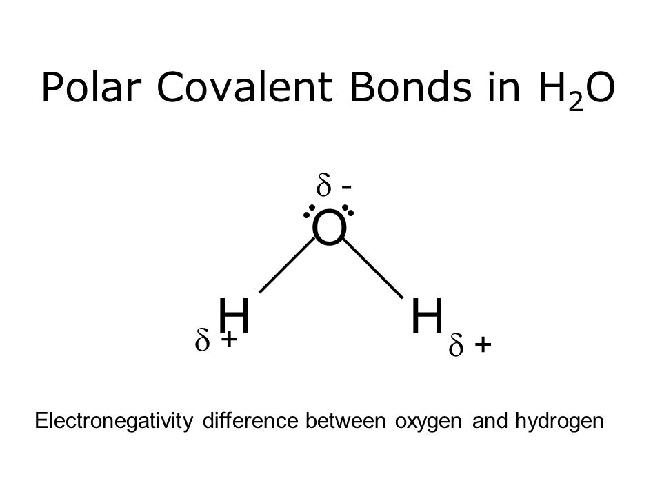 Polar Covalent Bonds in H 2 O O HH  + +  + +  - - Electronegativity difference between oxygen and hydrogen