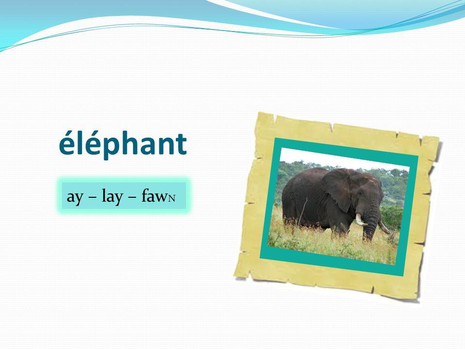 éléphant ay – lay – faw N