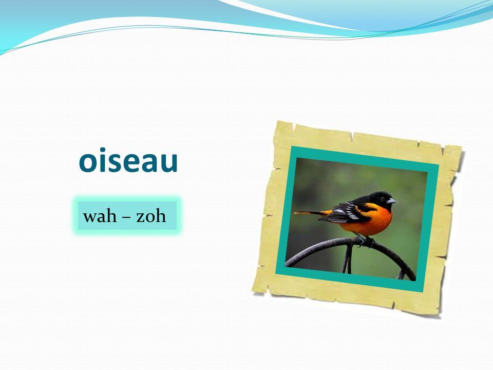 oiseau wah – zoh