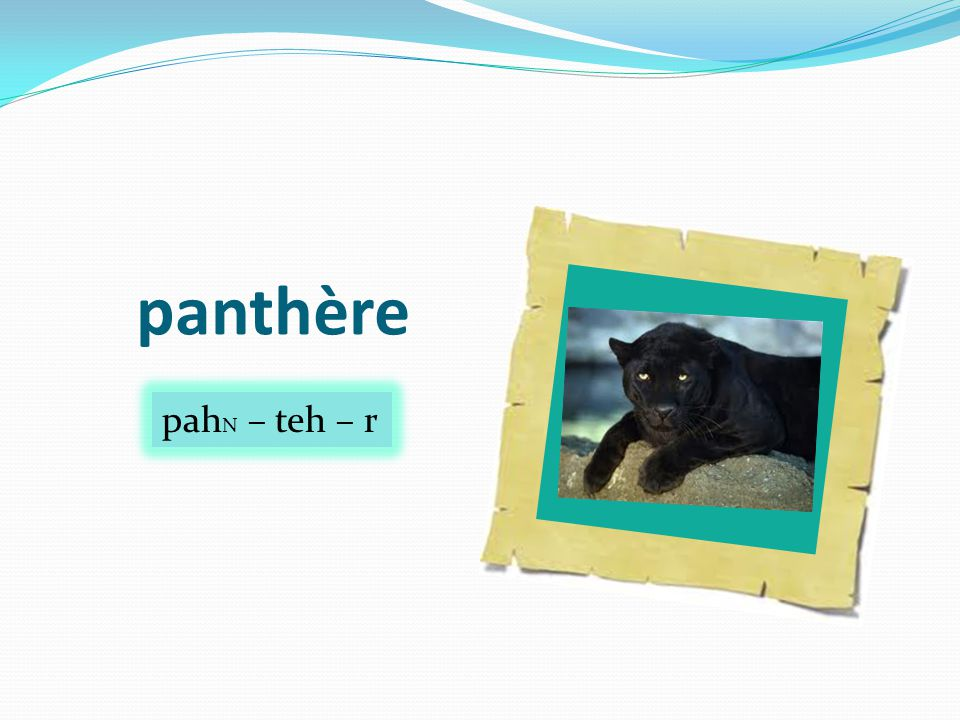 panthère pah N – teh – r
