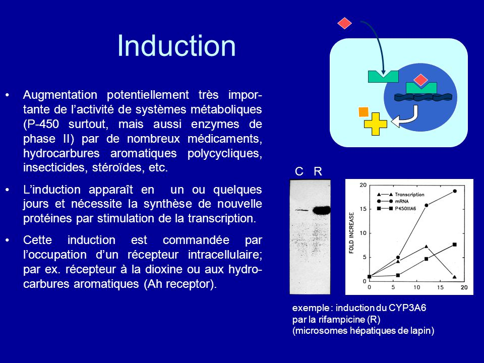 Induction Augmentation potentiellement très impor- tante de l'activité de systèmes métaboliques (P-450 surtout, mais aussi enzymes de phase II) par de nombreux médicaments, hydrocarbures aromatiques polycycliques, insecticides, stéroïdes, etc.