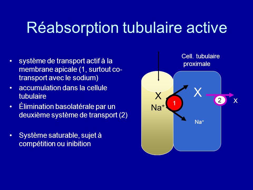 Réabsorption tubulaire active système de transport actif à la membrane apicale (1, surtout co- transport avec le sodium) accumulation dans la cellule tubulaire Élimination basolatérale par un deuxième système de transport (2) Système saturable, sujet à compétition ou inibition X X Na + X Cell.