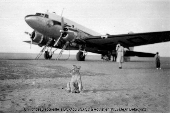Un lionceau accueille le DC-3 du SGACC à Aoulef en 1953 (Jean Delacroix)