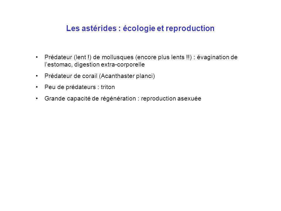 Les astérides : écologie et reproduction Prédateur (lent !) de mollusques (encore plus lents !!) : évagination de l'estomac, digestion extra-corporell